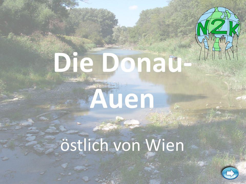 Die Donau- Auen östlich von Wien