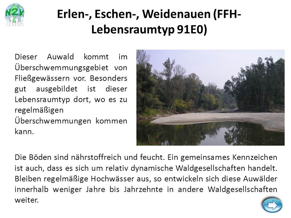 Die Böden sind nährstoffreich und feucht. Ein gemeinsames Kennzeichen ist auch, dass es sich um relativ dynamische Waldgesellschaften handelt. Bleiben
