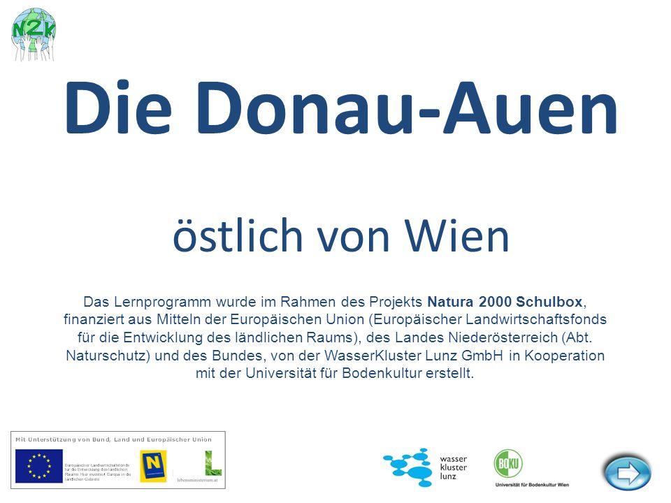 Die Donauauen östlich von Wien sind eine der letzten großen zusammenhängenden Flusslandschaften Mitteleuropas.