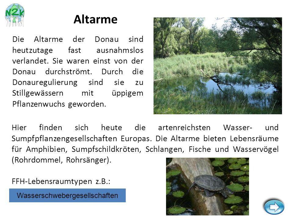 Hier finden sich heute die artenreichsten Wasser- und Sumpfpflanzengesellschaften Europas. Die Altarme bieten Lebensräume für Amphibien, Sumpfschildkr