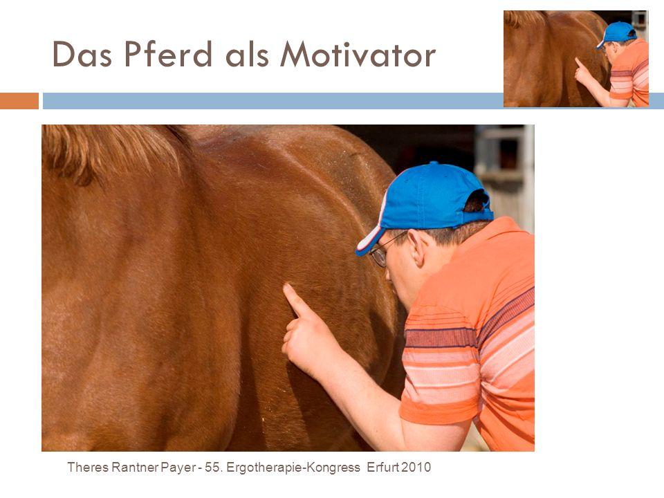 Um das Therapieziel mit Hilfe des Pferdes effizienter zu erreichen als mit herkömmlichen Mitteln, ist es wichtig zu erkennen, auf welcher Ebene das Pf