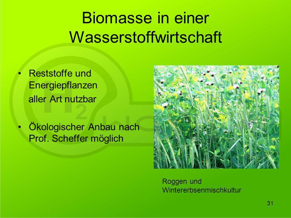 Biomasse in einer Wasserstoffwirtschaft Reststoffe und Energiepflanzen aller Art nutzbar Ökologischer Anbau nach Prof. Scheffer möglich 31 Roggen und