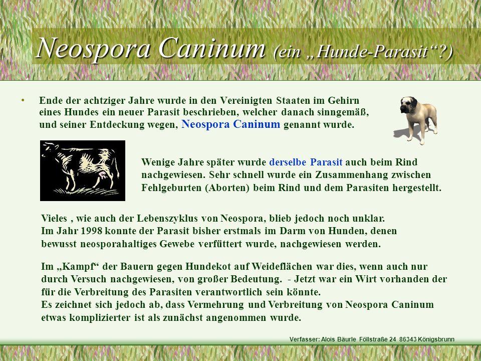 Neospora Caninum (ein Hunde-Parasit?) Neospora Caninum (ein Hunde-Parasit?) Ende der achtziger Jahre wurde in den Vereinigten Staaten im Gehirn eines