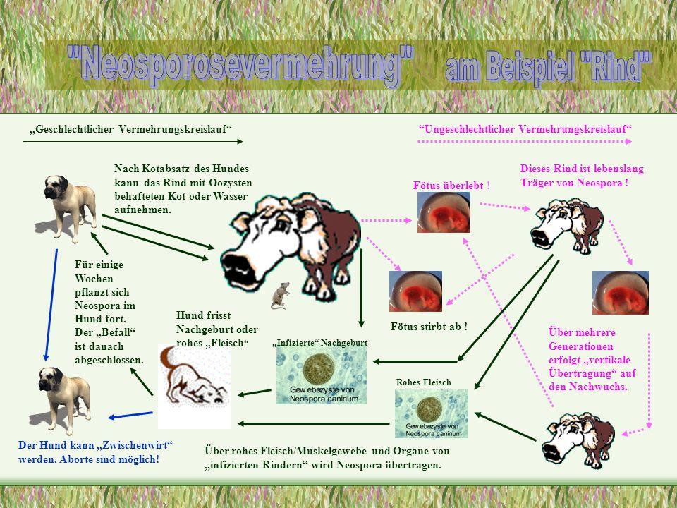 Geschlechtlicher VermehrungskreislaufUngeschlechtlicher Vermehrungskreislauf Fötus stirbt ab ! Fötus überlebt ! Über mehrere Generationen erfolgt vert