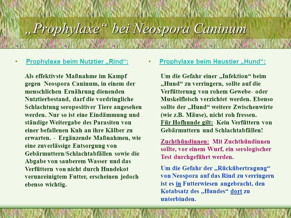 Prophylaxe bei Neospora Caninum Prophylaxe beim Nutztier Rind:Prophylaxe beim Haustier Hund: Als effektivste Maßnahme im Kampf gegen Neospora Caninum,