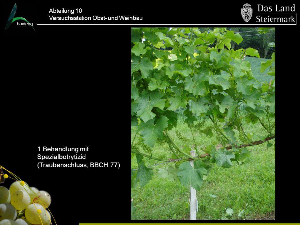 haidegg Abteilung 10 Versuchsstation Obst- und Weinbau 1 Behandlung mit Spezialbotrytizid (Traubenschluss, BBCH 77)
