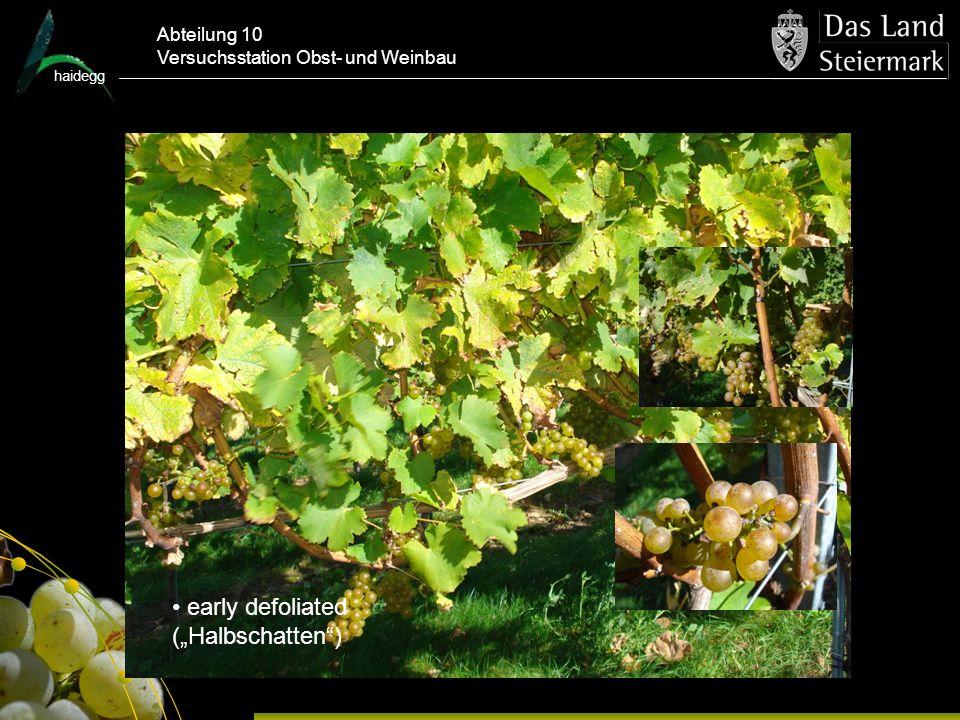 haidegg Abteilung 10 Versuchsstation Obst- und Weinbau early defoliated (Halbschatten)
