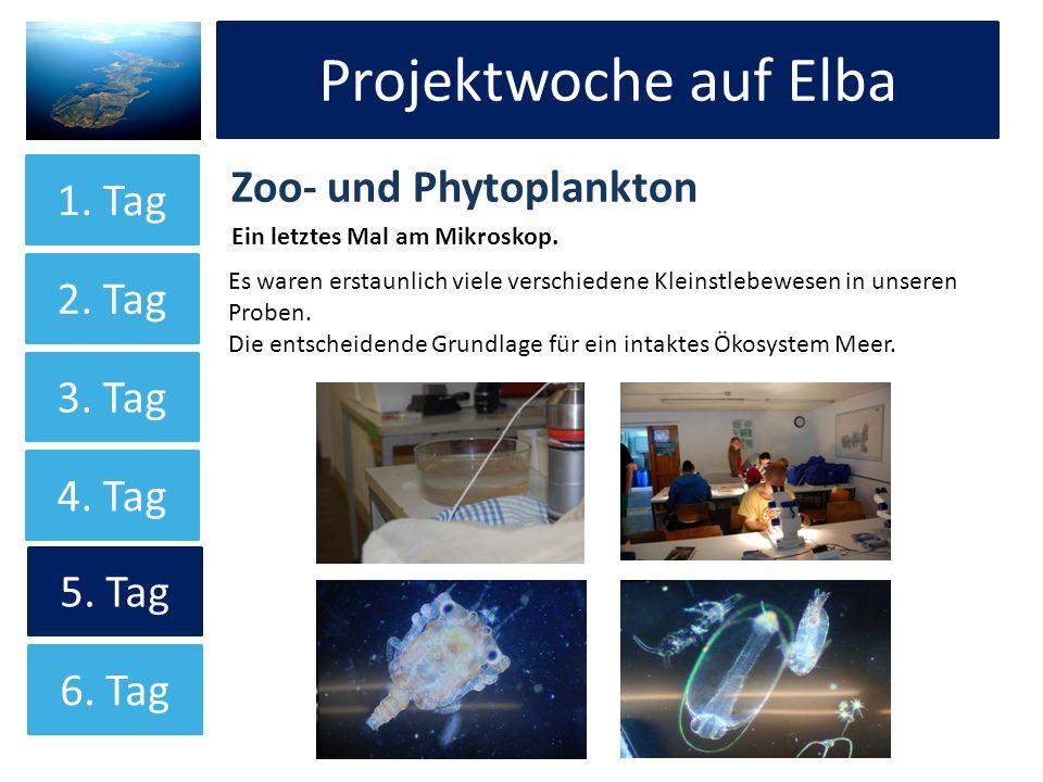 Projektwoche auf Elba Zoo- und Phytoplankton Ein letztes Mal am Mikroskop. Projektwoche auf Elba 1. Tag 2. Tag 3. Tag 4. Tag 5. Tag Es waren erstaunli