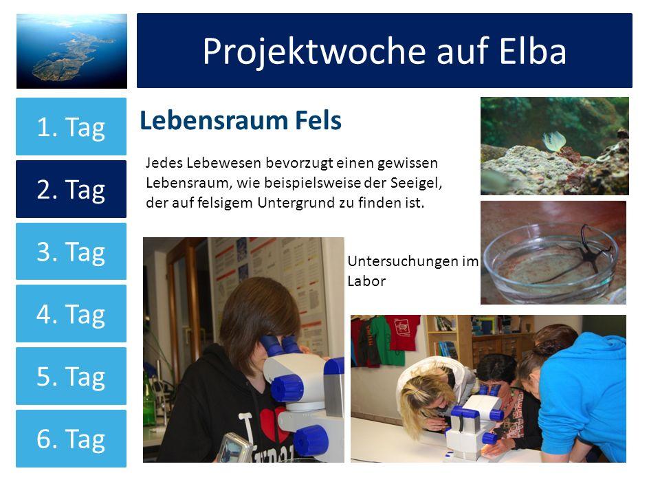 Projektwoche auf Elba Lebensraum Fels Projektwoche auf Elba 1. Tag 2. Tag 3. Tag 4. Tag 5. Tag 6. Tag Untersuchungen im Labor Jedes Lebewesen bevorzug