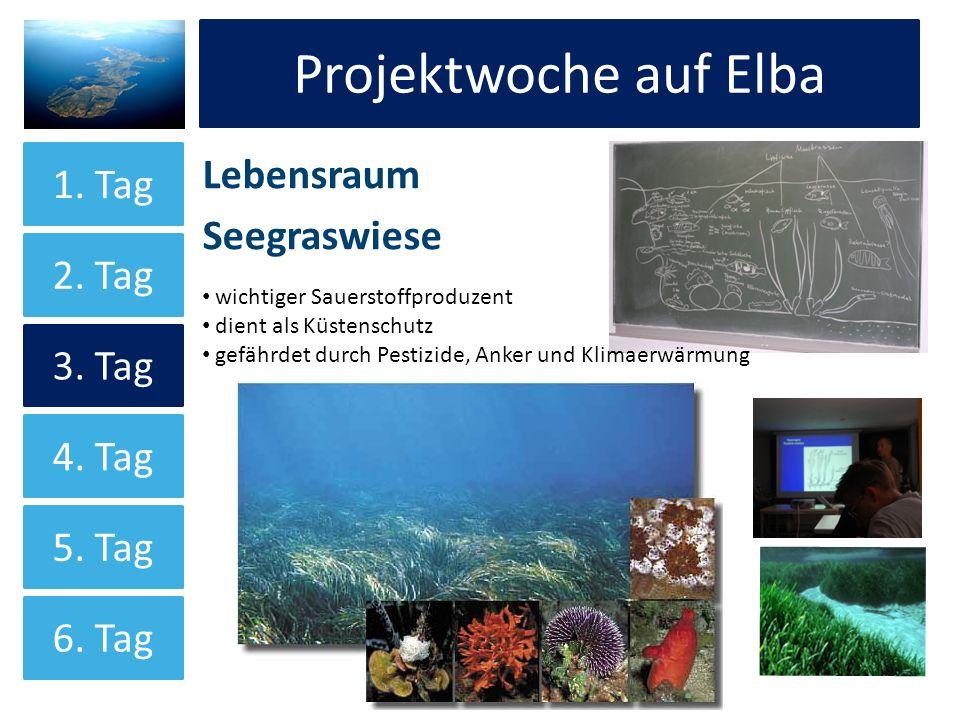 Projektwoche auf Elba Lebensraum Seegraswiese Projektwoche auf Elba 1. Tag 2. Tag 3. Tag 4. Tag 5. Tag 6. Tag wichtiger Sauerstoffproduzent dient als