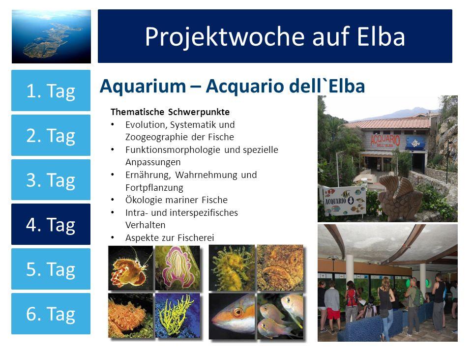 Projektwoche auf Elba Aquarium – Acquario dell`Elba Projektwoche auf Elba 1. Tag 2. Tag 3. Tag 4. Tag 5. Tag 6. Tag Thematische Schwerpunkte Evolution