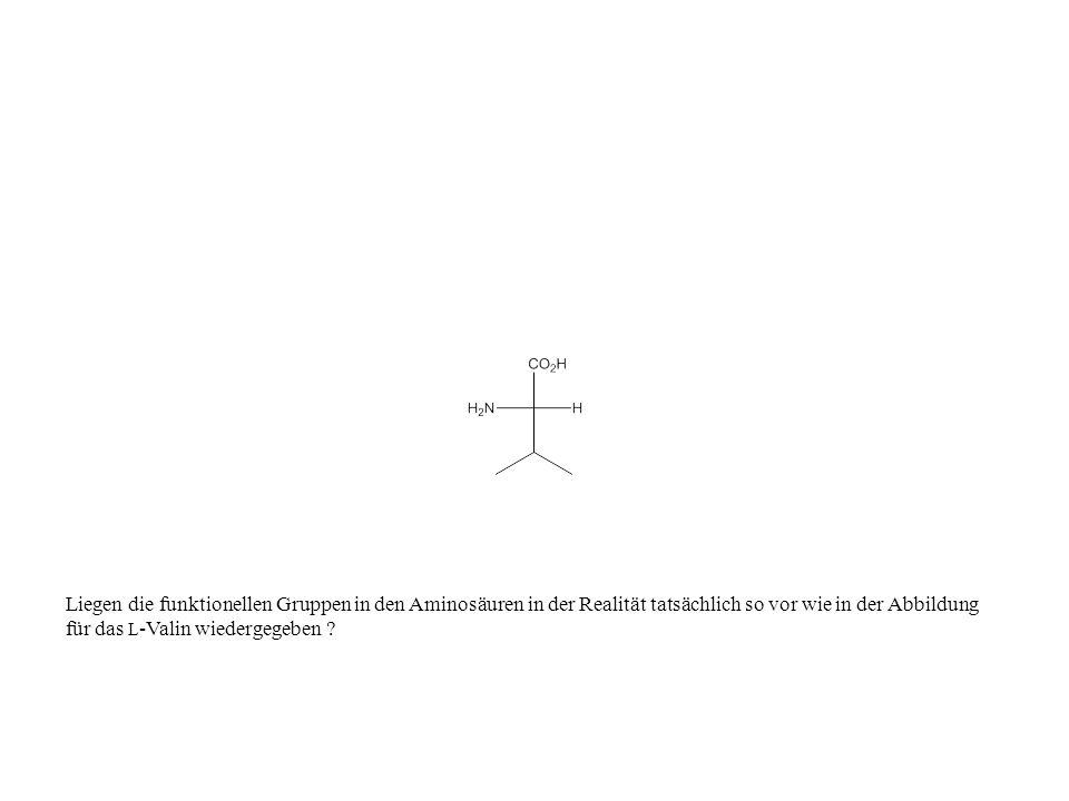 Liegen die funktionellen Gruppen in den Aminosäuren in der Realität tatsächlich so vor wie in der Abbildung für das L -Valin wiedergegeben ?