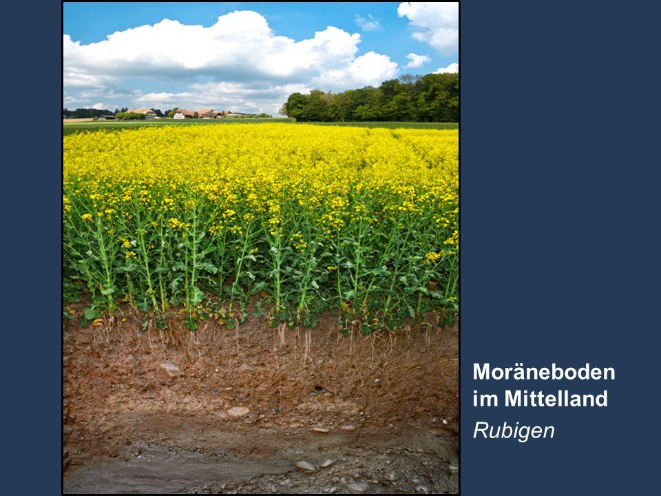 10 Name der Präsentation   Untertitel Autor Moräneboden im Mittelland Rubigen