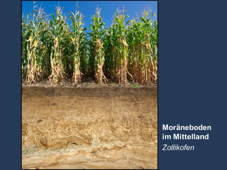 13 Name der Präsentation   Untertitel Autor Moräneboden im Mittelland Zollikofen