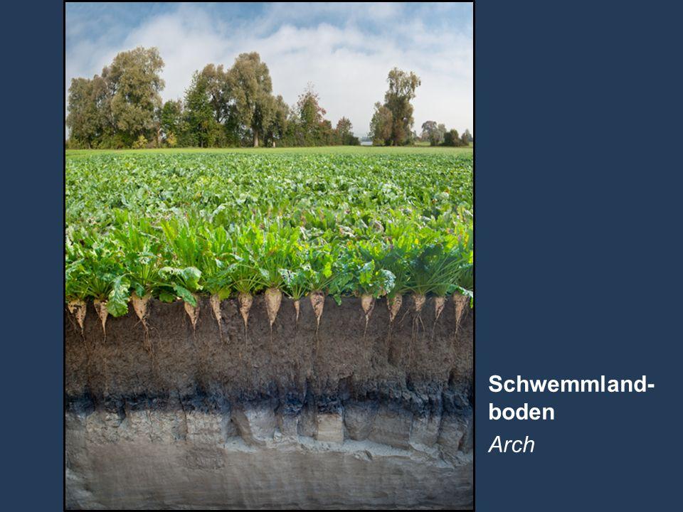 16 Name der Präsentation   Untertitel Autor Schwemmland- boden Arch