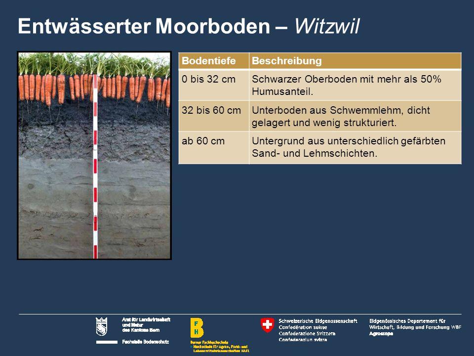 20 Name der Präsentation   Untertitel Autor BodentiefeBeschreibung 0 bis 32 cmSchwarzer Oberboden mit mehr als 50% Humusanteil.
