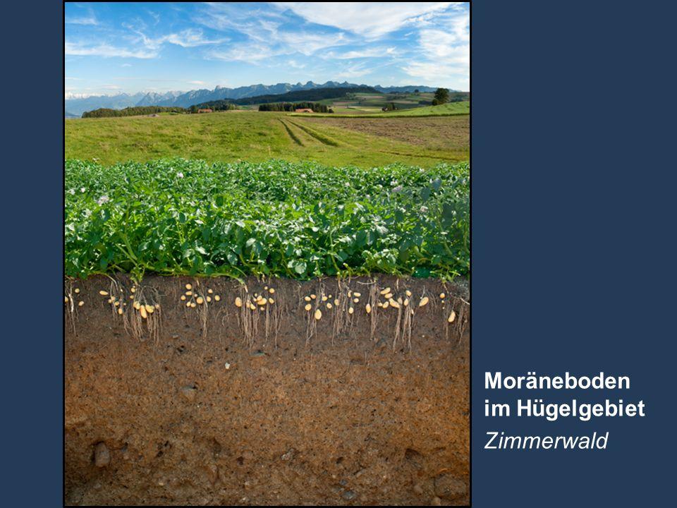 22 Name der Präsentation   Untertitel Autor Moräneboden im Hügelgebiet Zimmerwald