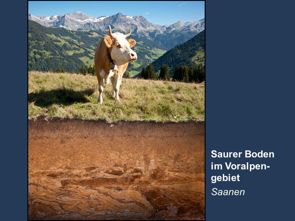 28 Name der Präsentation   Untertitel Autor Saurer Boden im Voralpen- gebiet Saanen