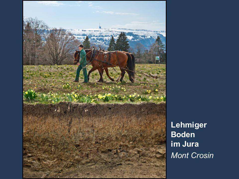4 Name der Präsentation   Untertitel Autor Lehmiger Boden im Jura Mont Crosin