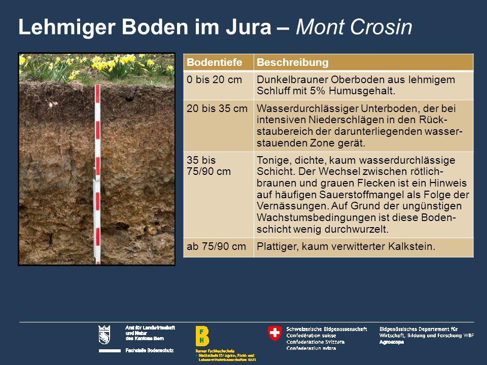 5 Name der Präsentation   Untertitel Autor BodentiefeBeschreibung 0 bis 20 cmDunkelbrauner Oberboden aus lehmigem Schluff mit 5% Humusgehalt.