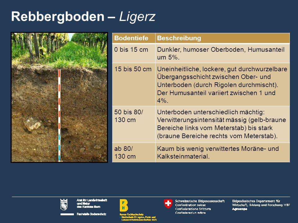 8 Name der Präsentation   Untertitel Autor BodentiefeBeschreibung 0 bis 15 cmDunkler, humoser Oberboden, Humusanteil um 5%.