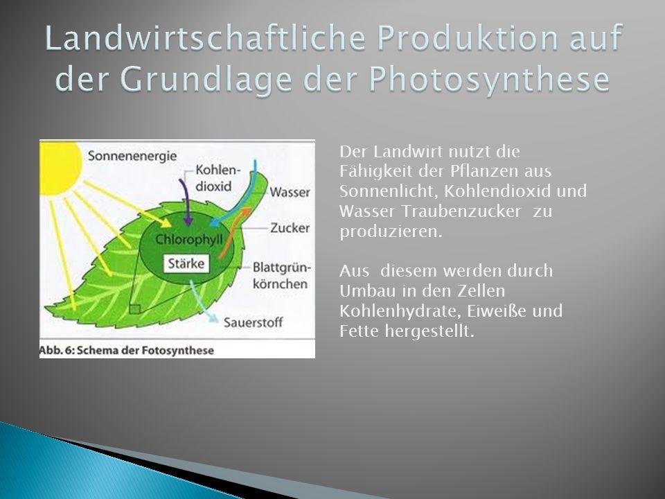 Der Landwirt nutzt die Fähigkeit der Pflanzen aus Sonnenlicht, Kohlendioxid und Wasser Traubenzucker zu produzieren. Aus diesem werden durch Umbau in