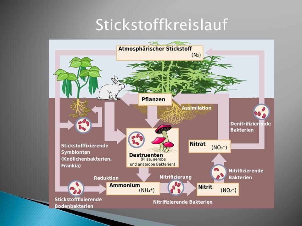 Biolandwirtschaft Intensive Landwirtschaft -hohe Produktionserträge mit hohen technischen Aufwand -Intensiver Einsatz von Insektiziden, Herbiziden und Fungiziden (Biozide) -hoher Anteil von Mineraldünger -verzicht auf Chemikalien - relativ niedrige Produktions- erträge bei hohem manuellen Aufwand -hoher Anteil von organischen Dünger -kein Einsatz von Bioziden