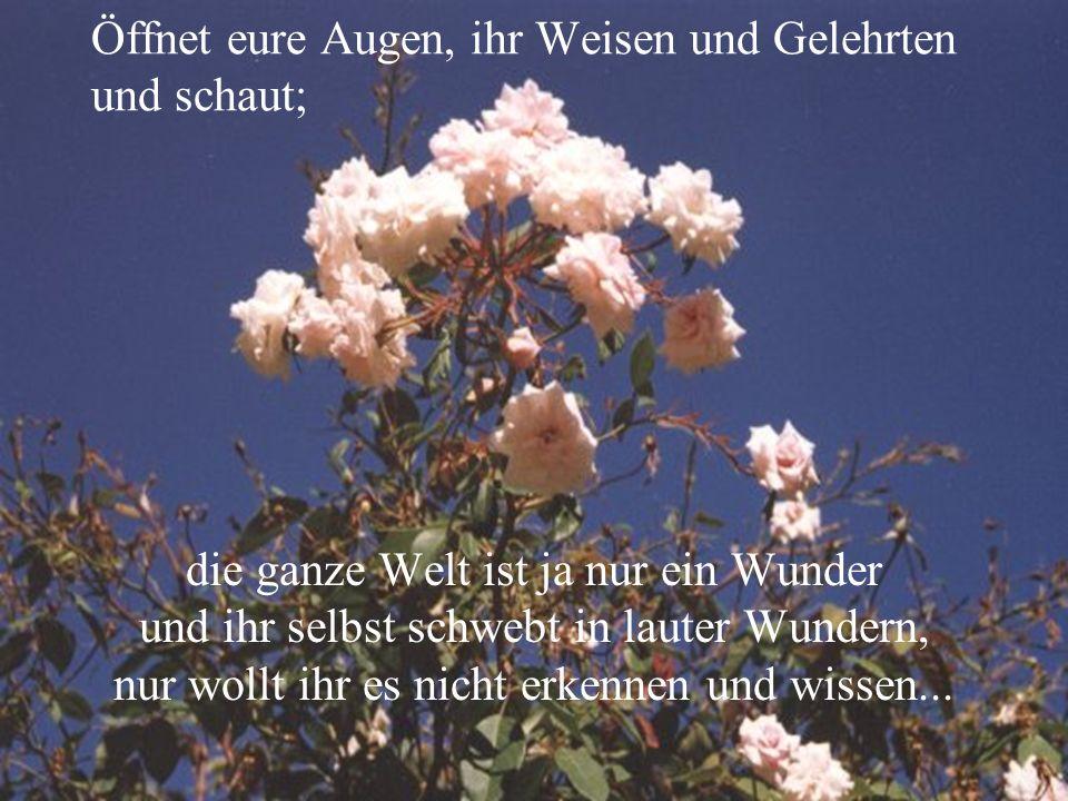 Oder ist das kein Wunder, wenn man die Blumen und Bäume betrachtet, wie sie alle auf der Erde sind und Blätter, Blüten und Früchte tragen?...