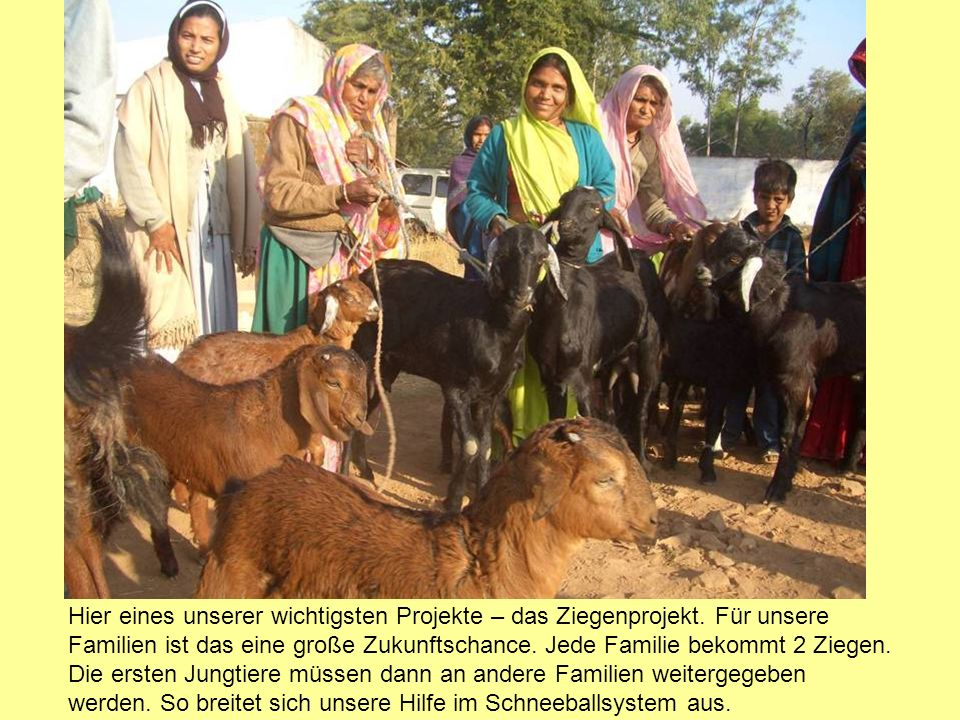 Für die Kinder sind die Ziegen Spielkamerad und Nutztier zugleich.