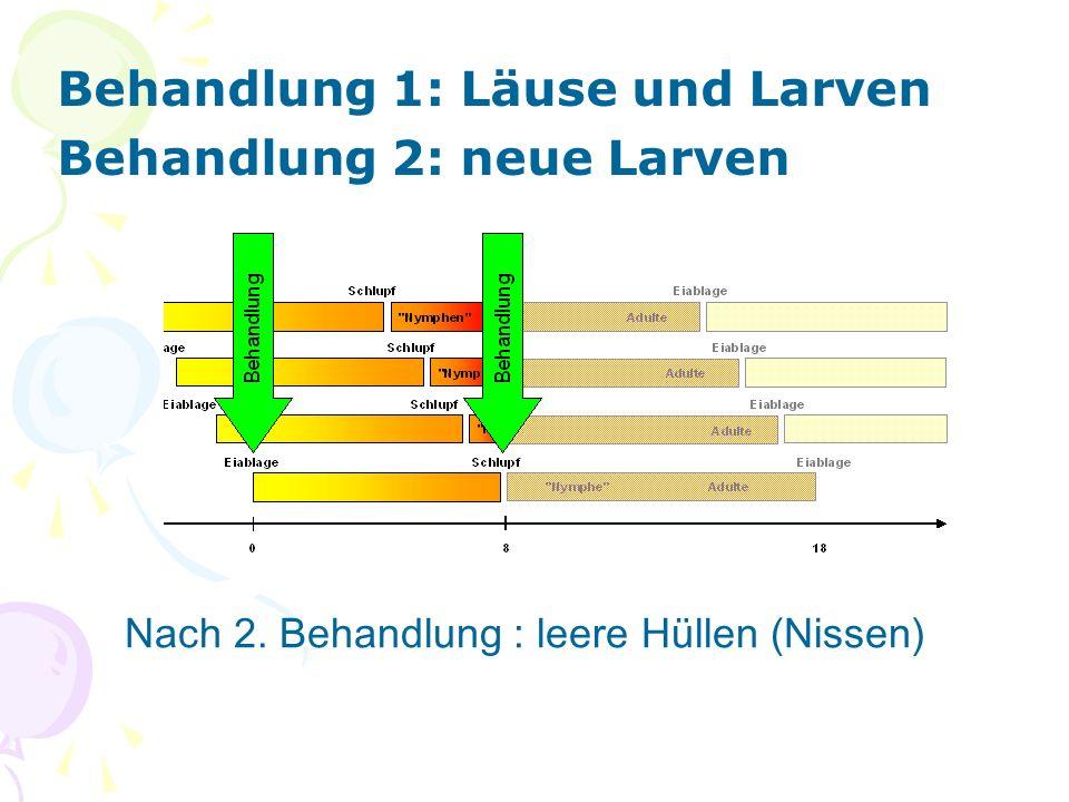 Behandlung 1: Läuse und Larven Behandlung 2: neue Larven Nach 2. Behandlung : leere Hüllen (Nissen)
