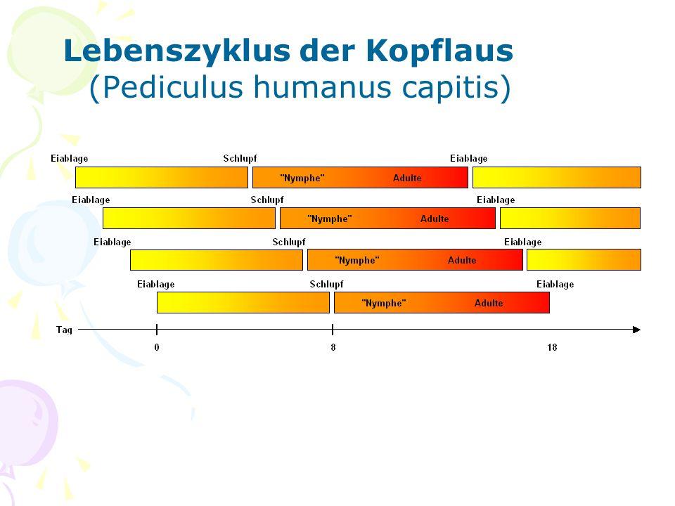 Anleitung zur Untersuchung auf Kopflausbefall mithilfe von Haarspülung 6.