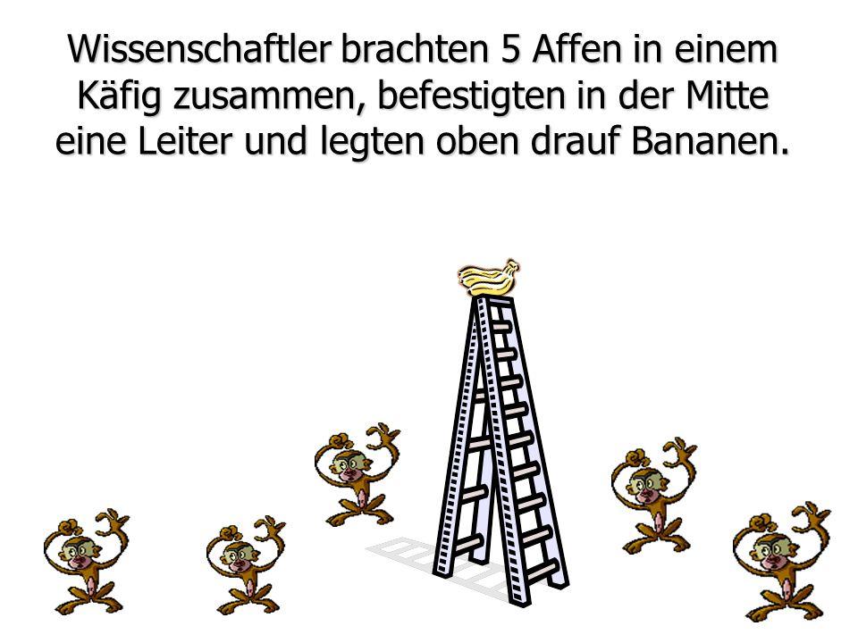 Wissenschaftler brachten 5 Affen in einem Käfig zusammen, befestigten in der Mitte eine Leiter und legten oben drauf Bananen.