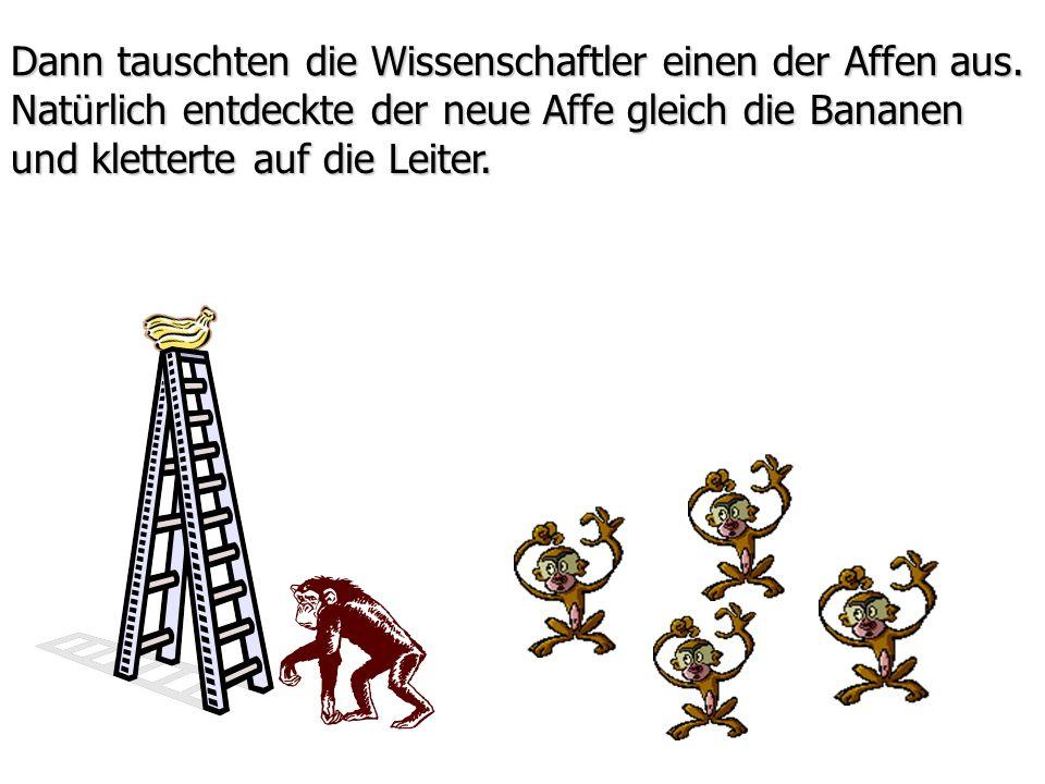 Dann tauschten die Wissenschaftler einen der Affen aus. Natürlich entdeckte der neue Affe gleich die Bananen und kletterte auf die Leiter.