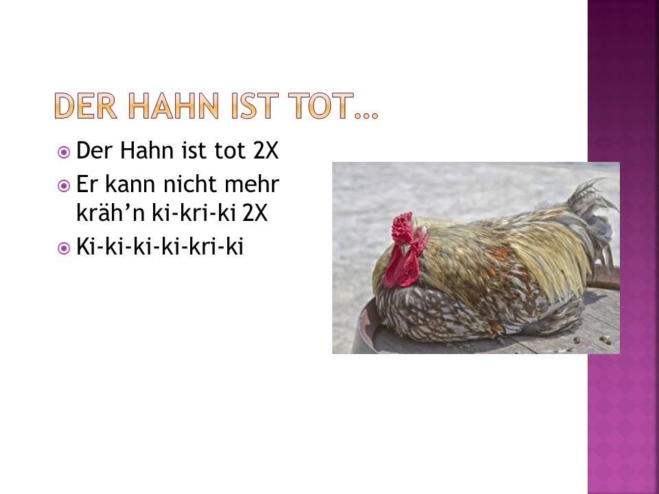 Der Hahn ist tot 2X Er kann nicht mehr krähn ki-kri-ki 2X Ki-ki-ki-ki-kri-ki