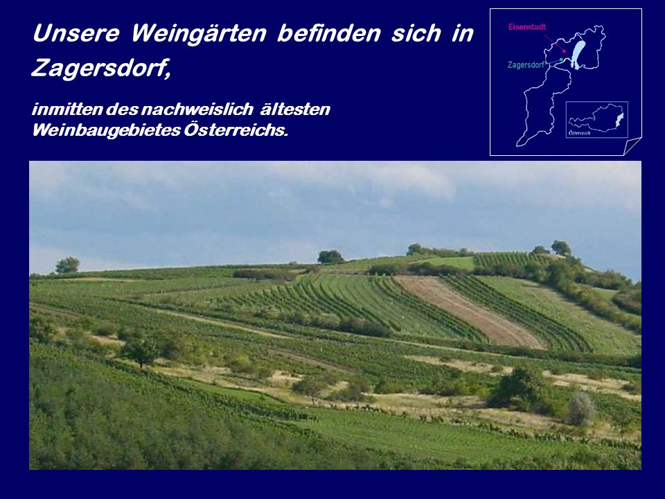 Unsere Weingärten befinden sich in Zagersdorf, inmitten des nachweislich ältesten Weinbaugebietes Österreichs.