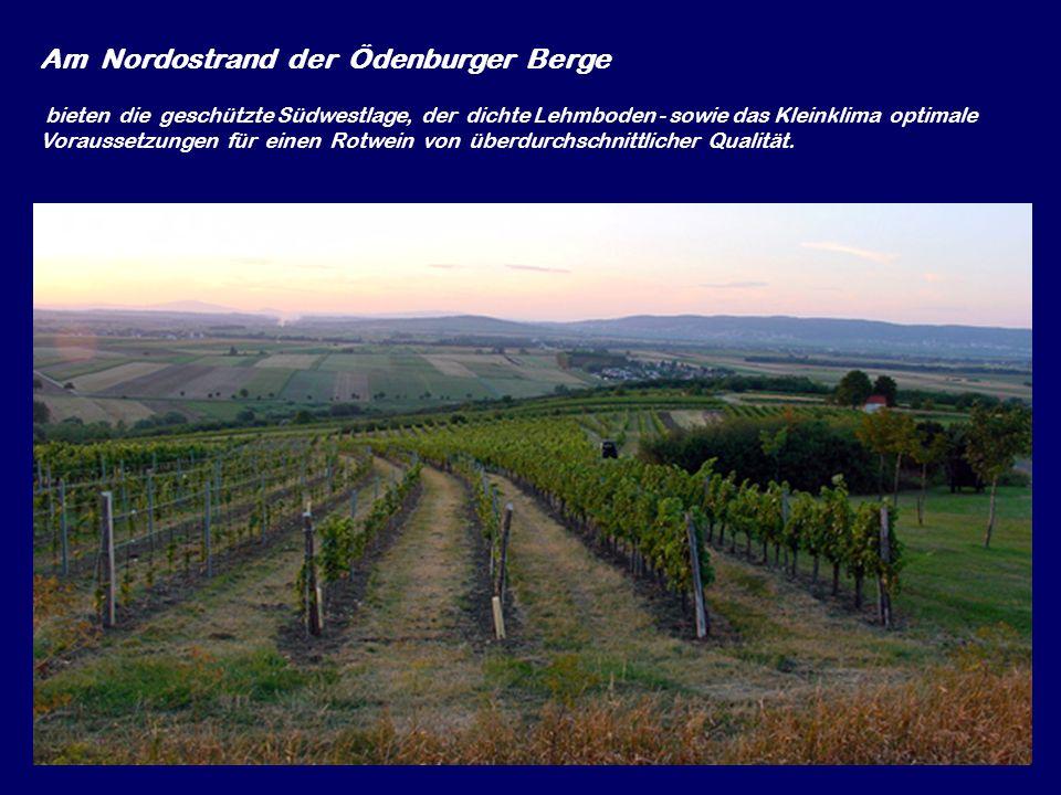 Grossgebirge – Pustika … Am Nordostrand der Ödenburger Berge bieten die geschützte Südwestlage, der dichte Lehmboden - sowie das Kleinklima optimale Voraussetzungen für einen Rotwein von überdurchschnittlicher Qualität.