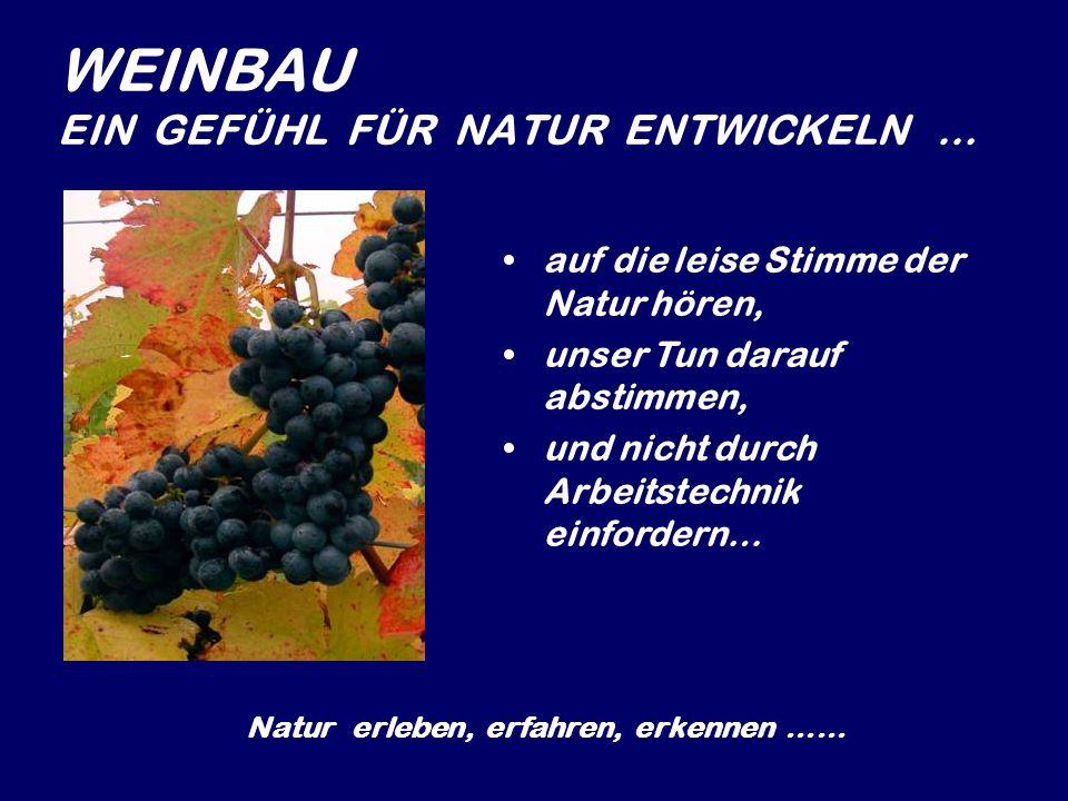 Unser Sortiment Zweigelt Blaufränkisch Die Schöpfung … ein Blaufränkisch benannt nach dem Oratorium von Joseph Haydn, nach Richtlinien des Kollegiums der Haydnweinwinzer vinifiziert und kontrolliert … Pustika Rose Frizzante Traubensaft Weinbrand