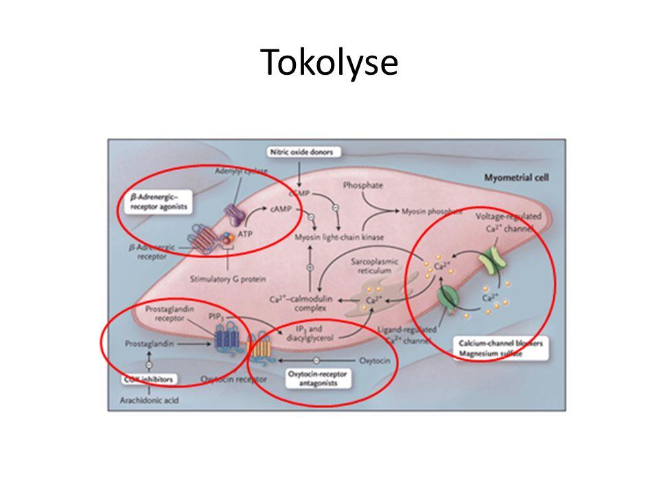 Tokolytika Zugelassen Betamimetika (Gynipral, Fenoterol) Atosiban (Tractocile) Off label Ca-Kanalblocker (Nifedipin/Adalat) PG-Antagonisten (Indometazin/Indocid) NO-Donatoren