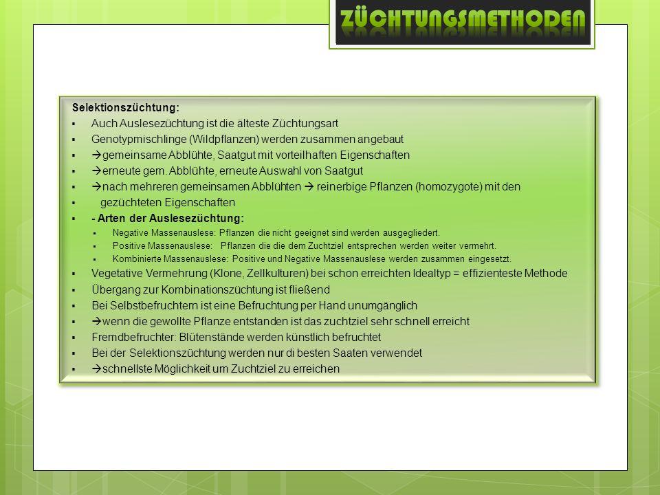 Selektionszüchtung: Auch Auslesezüchtung ist die älteste Züchtungsart Genotypmischlinge (Wildpflanzen) werden zusammen angebaut gemeinsame Abblühte, S