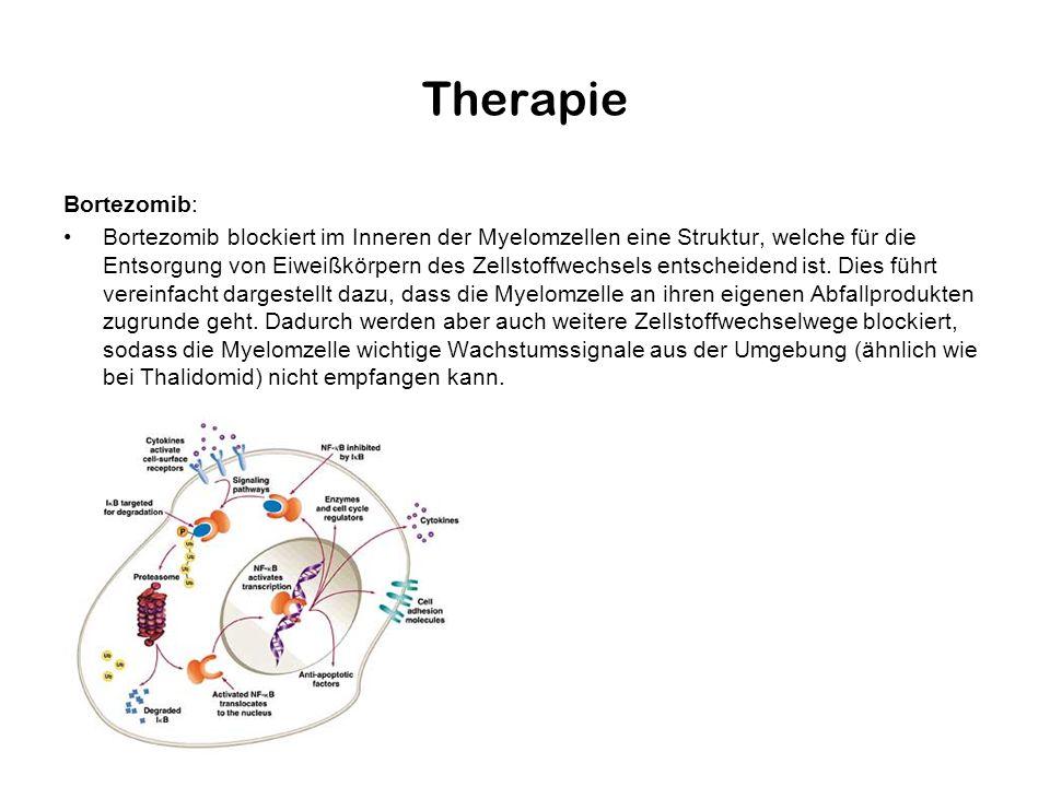 Therapie Bortezomib: Bortezomib blockiert im Inneren der Myelomzellen eine Struktur, welche für die Entsorgung von Eiweißkörpern des Zellstoffwechsels