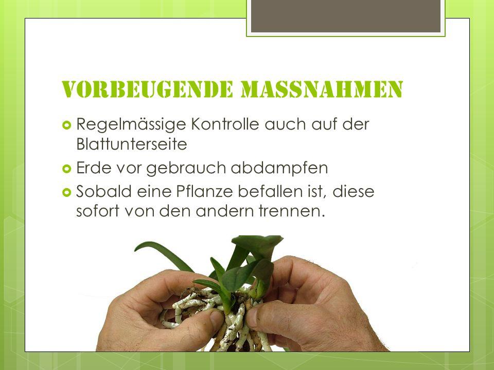 Vorbeugende Massnahmen Regelmässige Kontrolle auch auf der Blattunterseite Erde vor gebrauch abdampfen Sobald eine Pflanze befallen ist, diese sofort