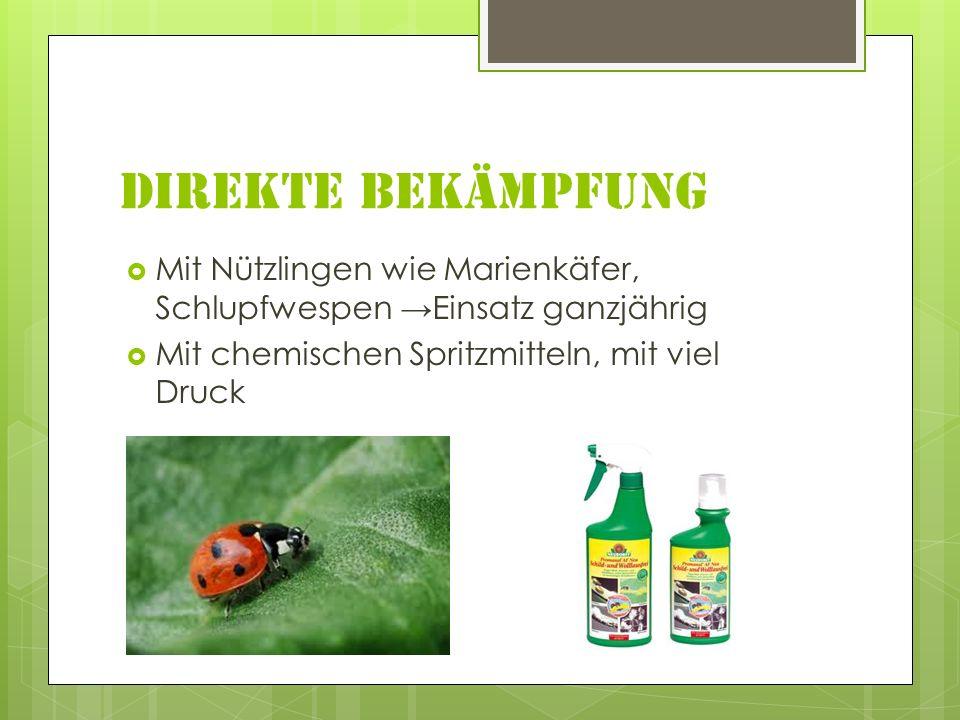 Direkte Bekämpfung Mit Nützlingen wie Marienkäfer, Schlupfwespen Einsatz ganzjährig Mit chemischen Spritzmitteln, mit viel Druck