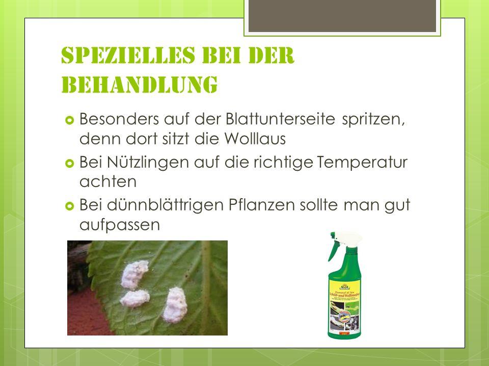 Spezielles bei der Behandlung Besonders auf der Blattunterseite spritzen, denn dort sitzt die Wolllaus Bei Nützlingen auf die richtige Temperatur achten Bei dünnblättrigen Pflanzen sollte man gut aufpassen