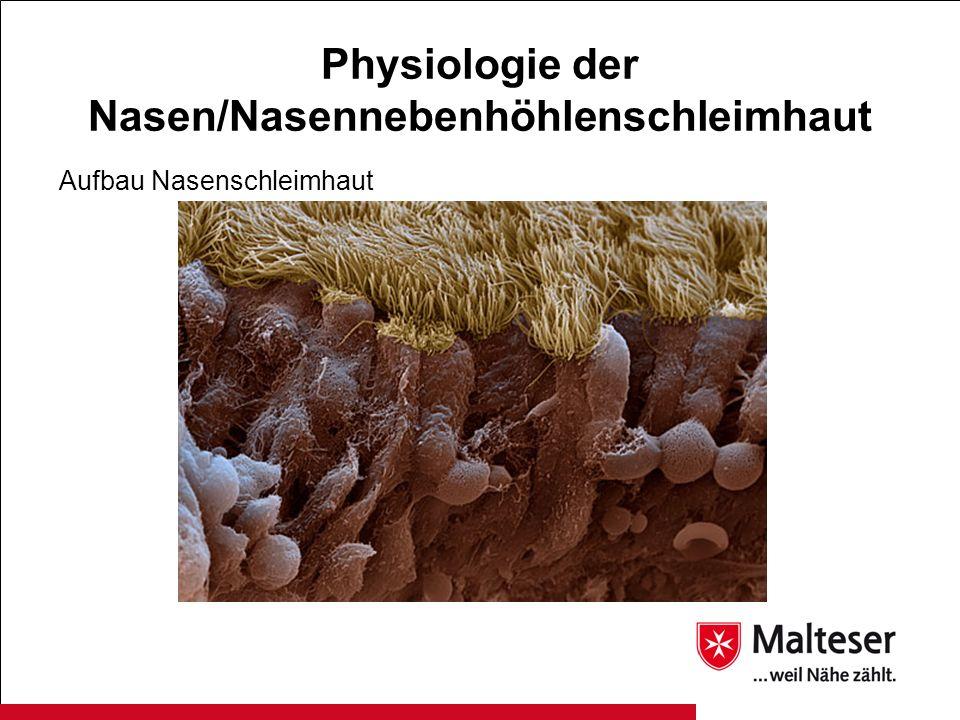 Physiologie der Nasen/Nasennebenhöhlenschleimhaut Aufbau Nasenschleimhaut
