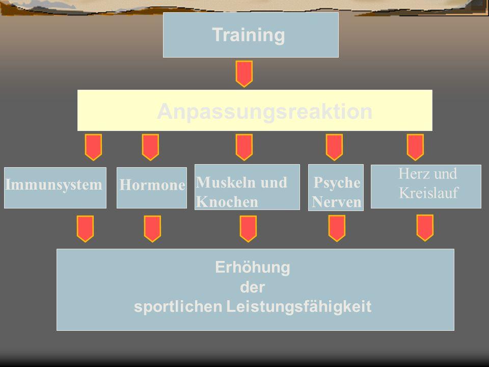 Training Anpassungsreaktion Immunsystem Hormone Muskeln und Knochen Herz und Kreislauf Psyche Nerven Erhöhung der sportlichen Leistungsfähigkeit