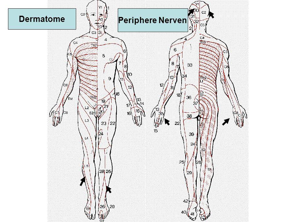 Flupirtin (Katadolon (R) ) Öffnung von Kalium-Kanälen > Hyperpolarisation > verminderte glutamaterge Transmission muskelrelaxierender Effekt NW: Müdigkeit, Schwindel Kein Abhängigkeitspotential
