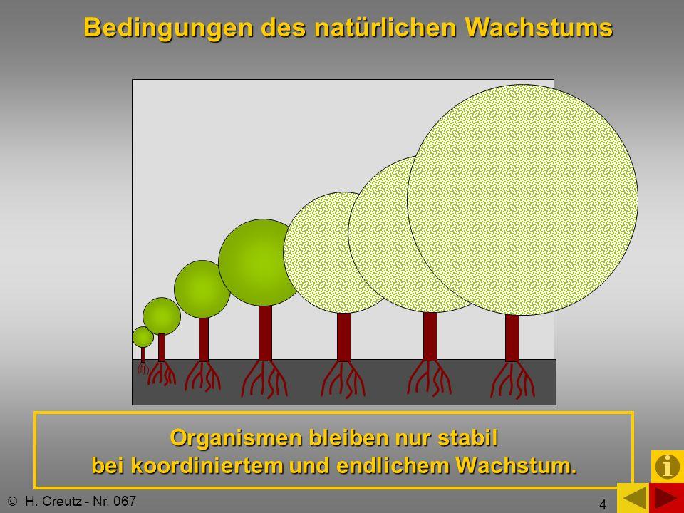 4 Organismen bleiben nur stabil bei koordiniertem und endlichem Wachstum. H. Creutz - Nr. 067 Bedingungen des natürlichen Wachstums