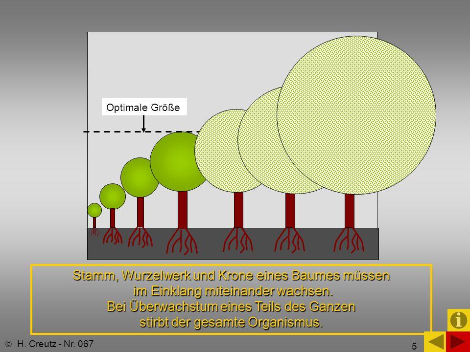 5 Optimale Größe H. Creutz - Nr. 067 Stamm, Wurzelwerk und Krone eines Baumes müssen im Einklang miteinander wachsen. Bei Überwachstum eines Teils des