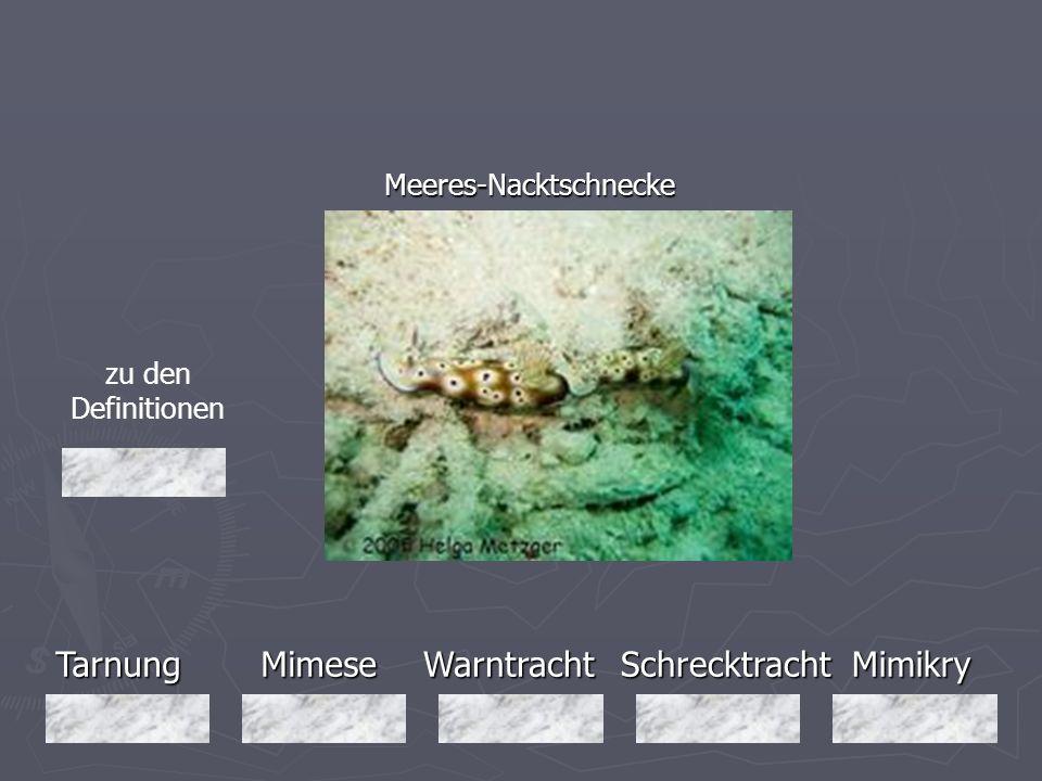 TarnungMimeseMimikryWarntrachtSchrecktracht Meeres-Nacktschnecke