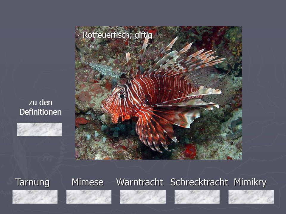 TarnungMimeseMimikryWarntrachtSchrecktracht Rotfeuerfisch; giftig zu den Definitionen